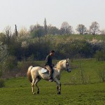 cheval01